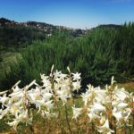 Hiking and Eating in Fiesole