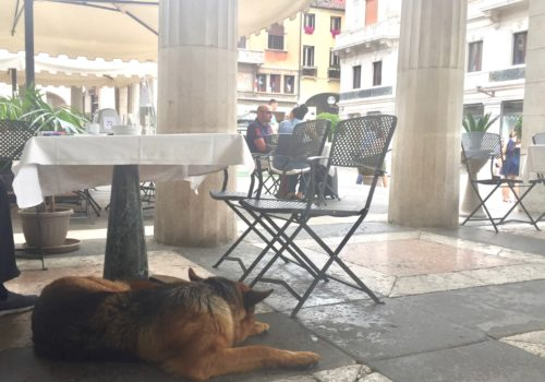 dogs in italy